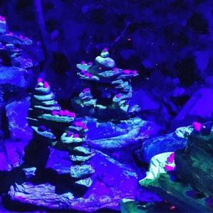 Foresta Lumina Coaticook Bymelm Québec