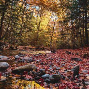 automne en Ontario - Ariana